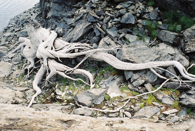 These roots go on and on...